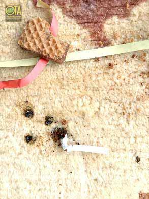 Rotweinfleck im Teppich vor der Teppichreinigung
