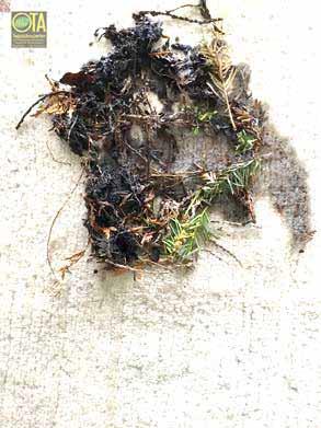 Schlamm und Regenwasser verunreinigten ein Teppich